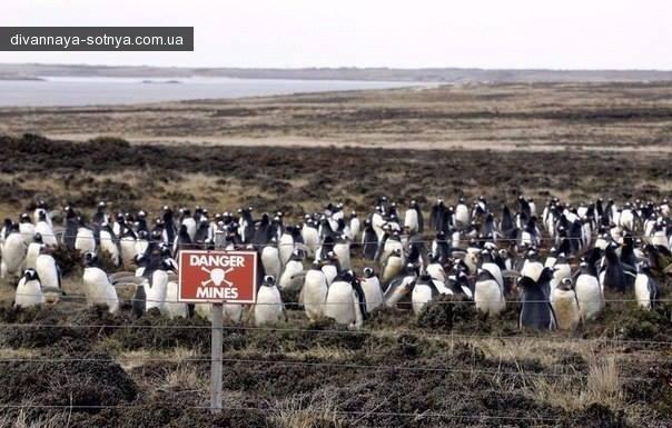Как война между Англией и Аргентиной 1982 года обернулась удачей для пингвинов