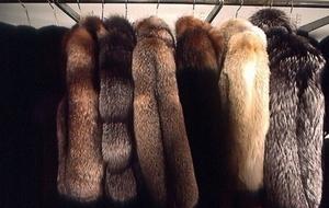 РЖД поймали на нарушениях при закупке меховых изделий на полмиллиарда рублей