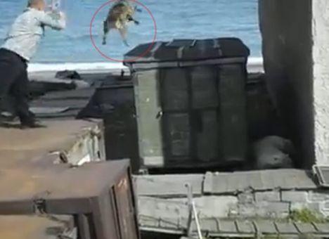 В РФ садисты, веселясь, бросили медведю живого пса