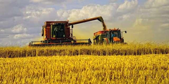 В Беларуси чернобыльские земли используют для выращивания продуктов