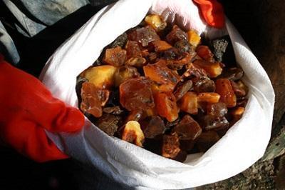 «Янтарная мафия» проникла в суды. Скупщик более двух тонн «солнечного камня» отделался штрафом