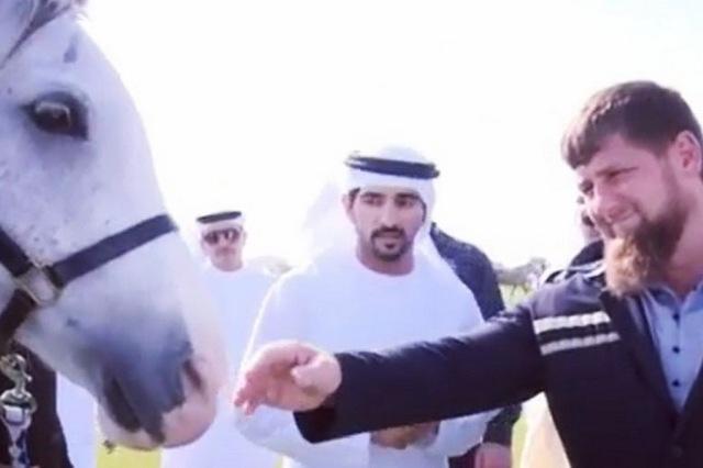 Transparency просит проверит подаренного Кадырову принцем Дубая скакуна