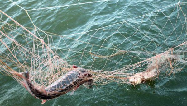 Люди Валентирова растянули браконьерские сети на промоине