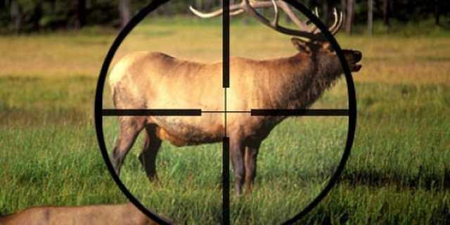 Подчиненных Остапа Семерака поймали на браконьерстве