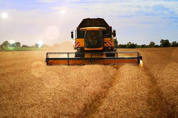 Минсельхоз в приказном порядке эвакуирует урожай зерна из Сибири
