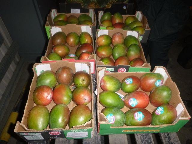 В Калининграде бульдозеры раздавили тонну манго