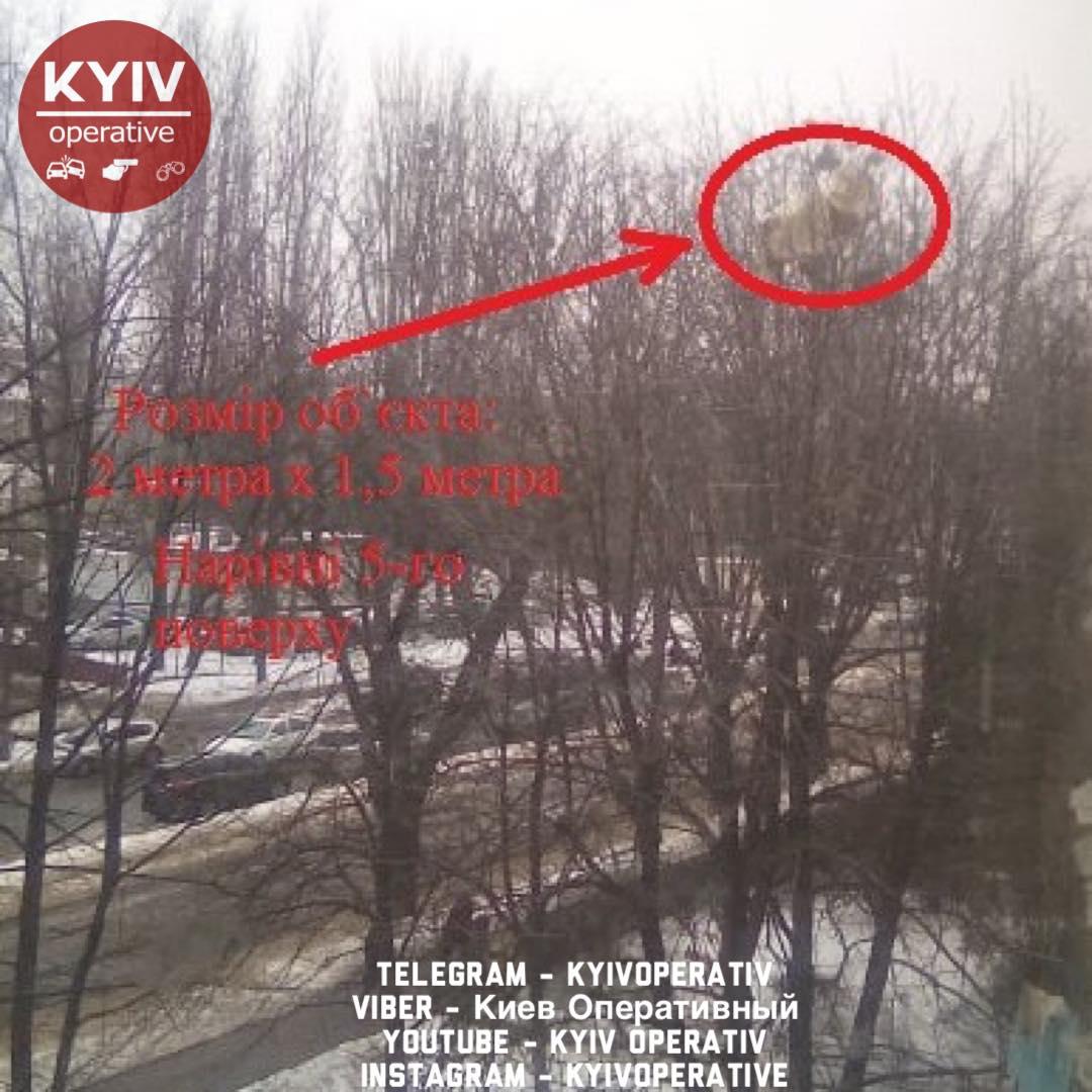 В Киеве из окна многоэтажки выбросили диван. Он застрял на дереве и висит там 10 дней. Фото: facebook.com/KyivOperativ